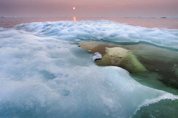 28_Paul-Souders-USA-The-water-bear-1.jpg
