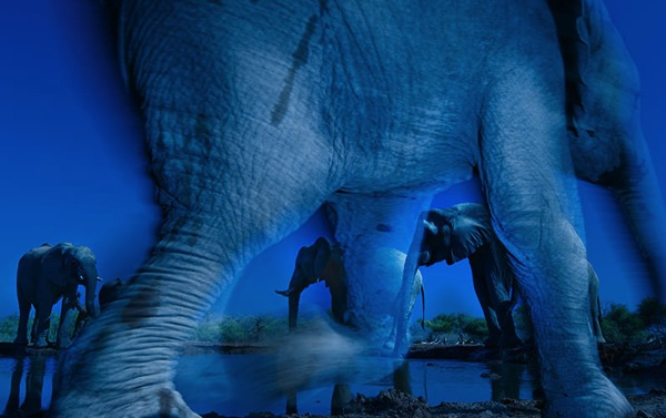 35_Greg-du-Toit-South-Africa-Essence-of-elephants-1.jpg