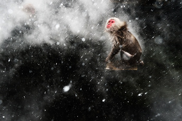 83_Jasper-Doest-The-Netherlands-Snow-moment-1.jpg
