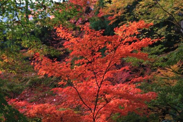 京都観光北野天満宮紅葉003.jpg