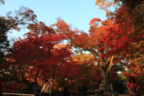 京都観光北野天満宮紅葉008.jpg