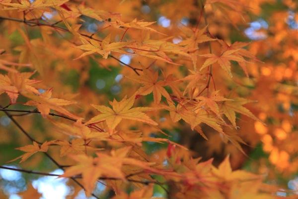 京都観光北野天満宮紅葉016.jpg