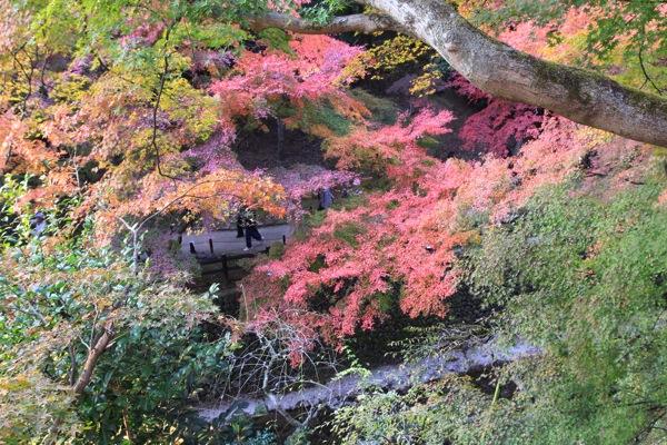 京都観光北野天満宮紅葉005.jpg