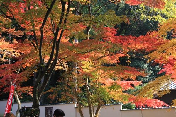 京都今熊野観音寺紅葉観光スポット混雑007.jpg