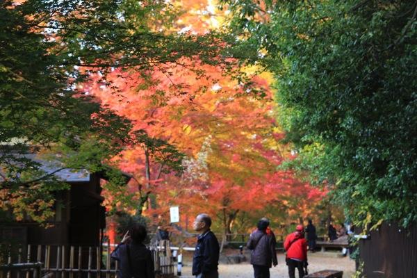 京都観光北野天満宮紅葉011.jpg