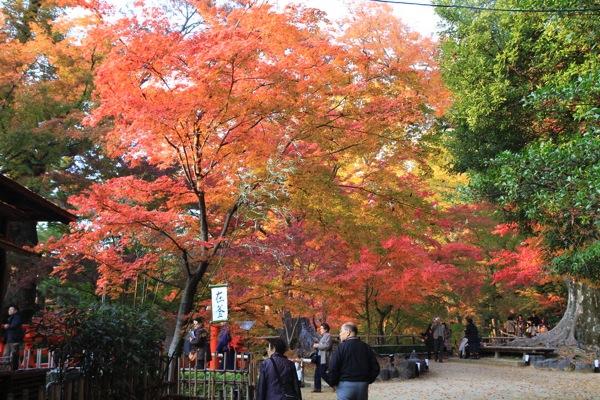京都観光北野天満宮紅葉013.jpg