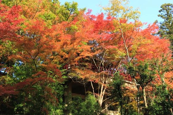 京都今熊野観音寺紅葉観光スポット混雑010.jpg