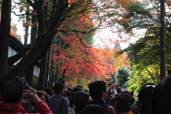 東福寺紅葉観光スポット混雑001.jpg