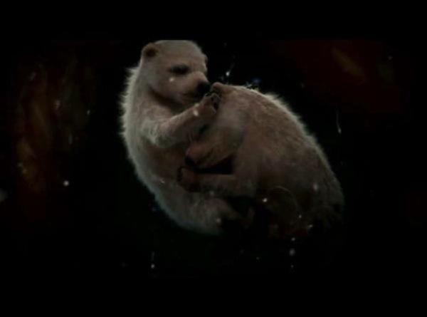 動物胎児画像6.jpg