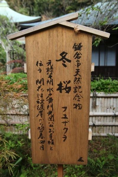 鎌倉瑞泉寺アクセス見どころおすすめ2.jpeg