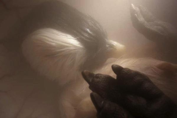 動物胎児画像5.jpg