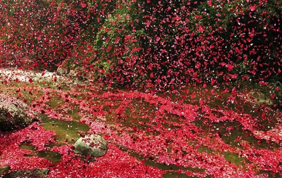 flower-petals1.jpg