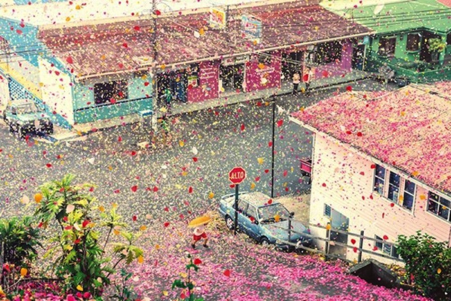 flower-petals3.jpg