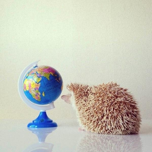 hedgehog3.jpg