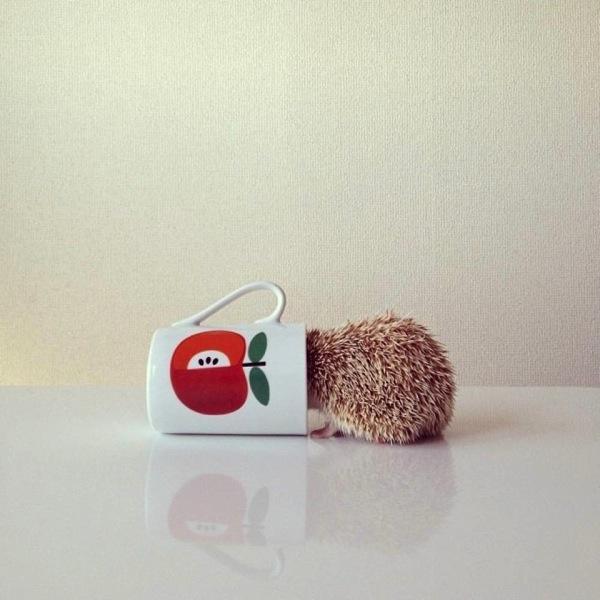 hedgehog5.jpg