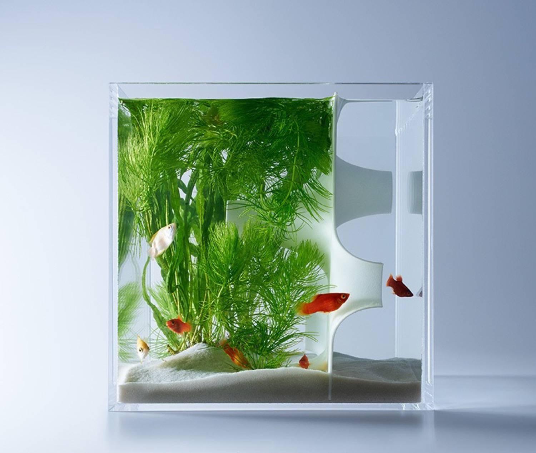 Minimal aquarium10