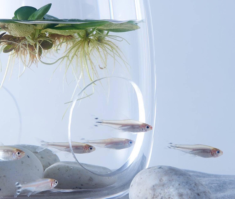 Minimal aquarium1