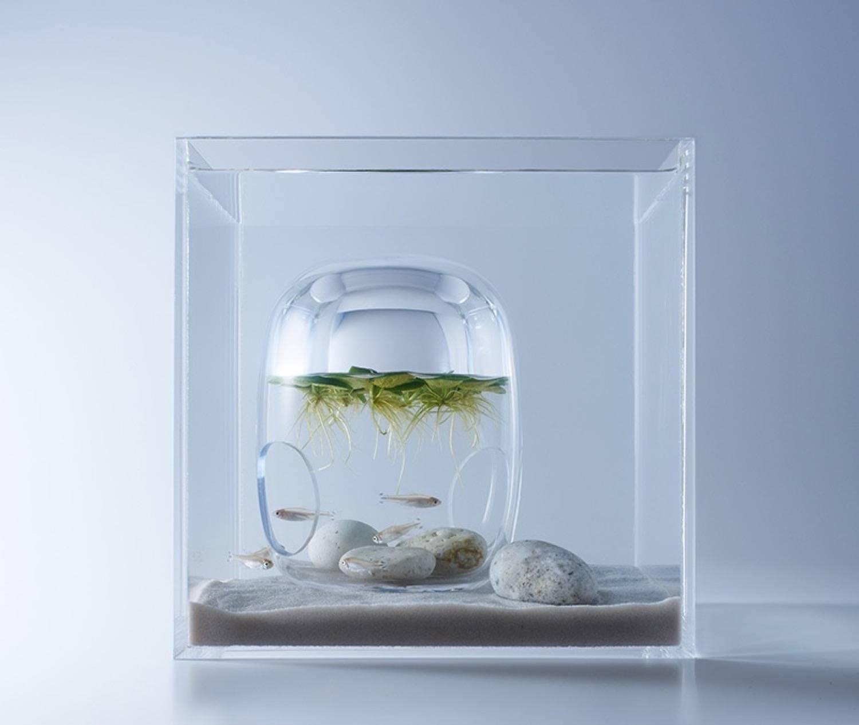 Minimal aquarium2