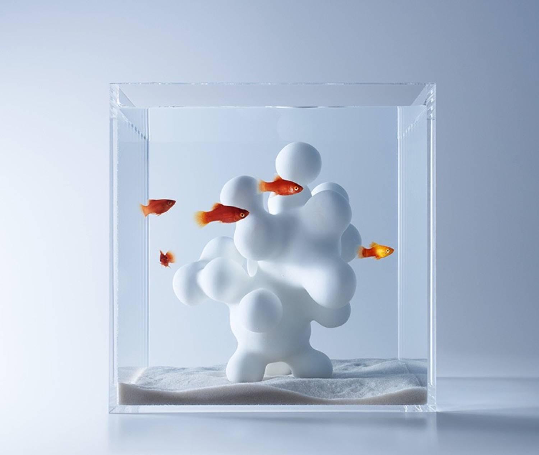 Minimal aquarium6