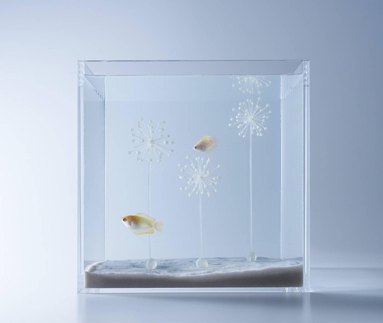 Minimal aquarium9