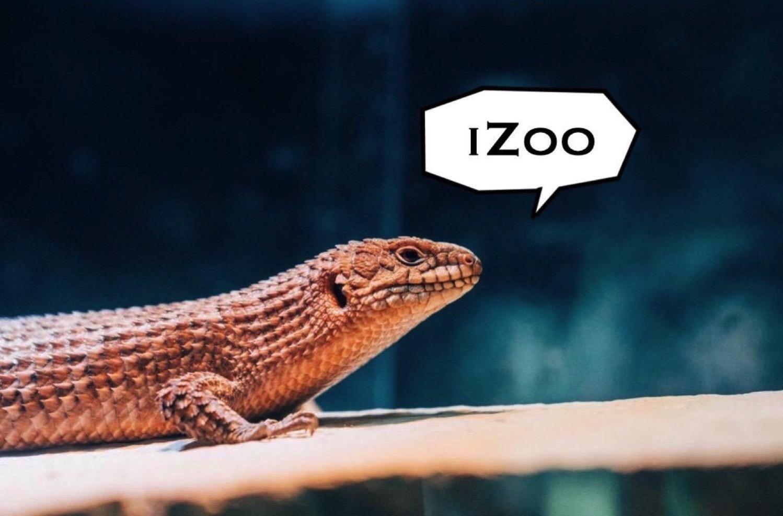Izoo 1