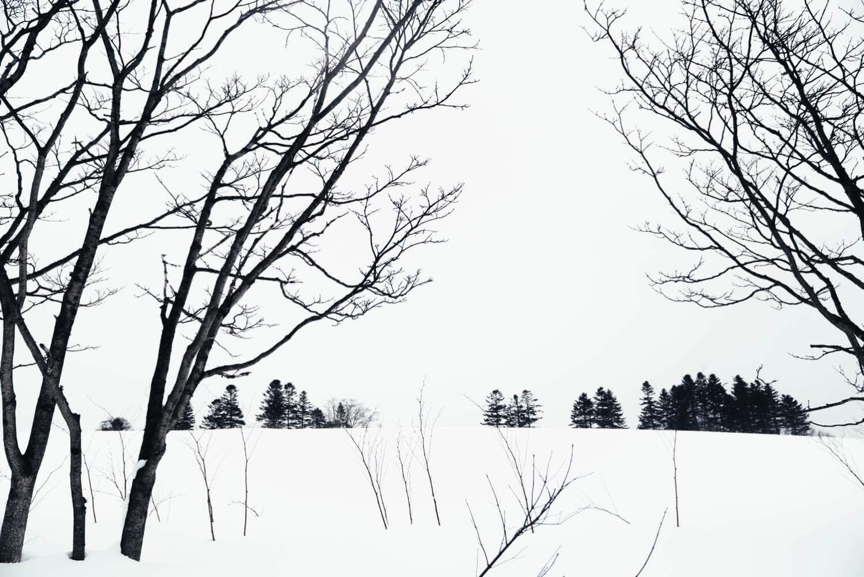 北海道の雪原風景2